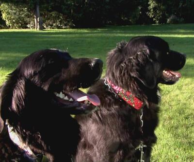 """Köpeğimize """"bekle"""" ve """"otur"""" komutlarını nasıl öğretmeliyiz?"""