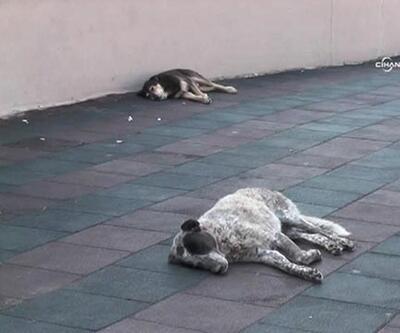 Yazlıkçılar köpeklerini sokağa terk edip gitti