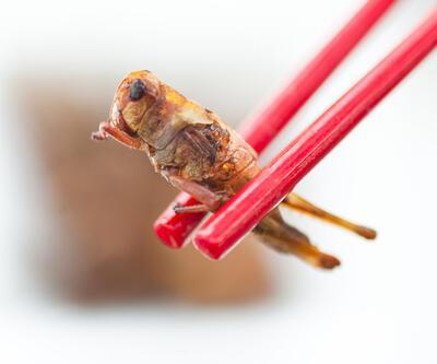 AB'in yeni gıdası: Böcekler