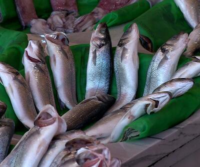 Ringa balığı omega 3 kaynağı