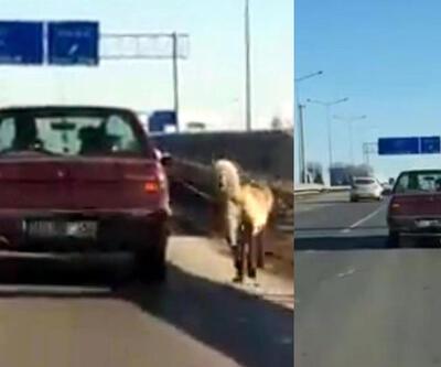 Köpeği otomobile bağlanıp götürdü