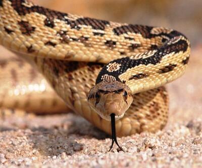 Yılanlar hakkında bilmediğiniz 15 gerçek