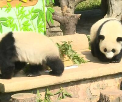 İkiz pandalara doğum günü sürprizi