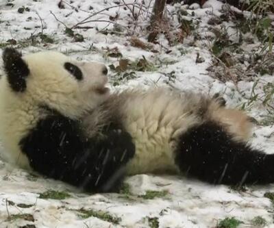 Hayatlarında ilk kez kar gören pandalar kendilerinden geçti