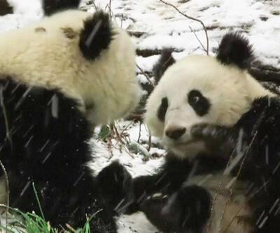 İkiz pandalar ilk kez kar görünce...