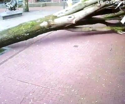 Devrilen ağacın altında kalmaktan kıl payı kurtuldular