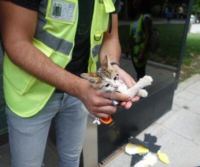 Mahsur kalan yavru kedi metronun duvarı kırılıp çıkarıldı