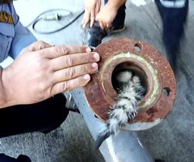 Yavru kedi sıkıştığı metal boru içerisinden kurtarıldı