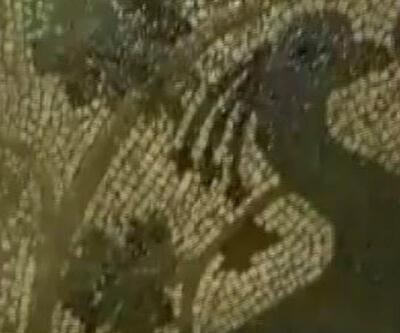 Definecilerin açtığı çukurdan 1800 yıllık tavus kusu mozaiği çıktı