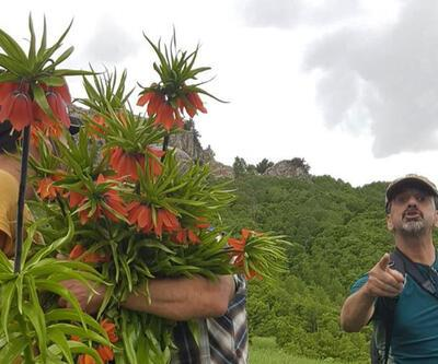 60 bin TL cezası olan bitkileri kopardılar
