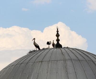 Leylekler caminin çatısına yuva yaptı
