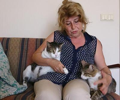 Komşusu mahkemeye verdi, engelli kedileriyle evinden ayrıldı