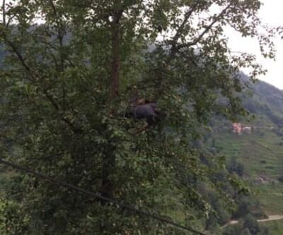 Armut toplamaya çıktığı ağaçta akıma kapılınca öldü