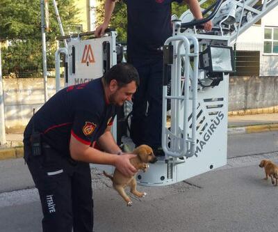 Çatıya çıkan yavru köpekler kurtarıldı
