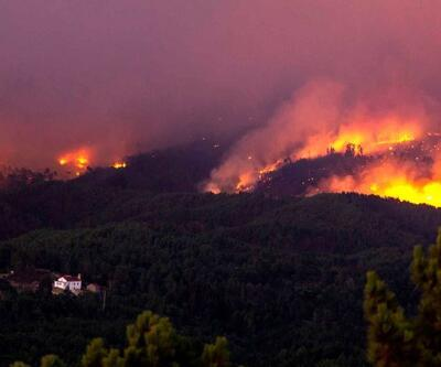 Portekiz'de orman yangınları: 8 yaralı