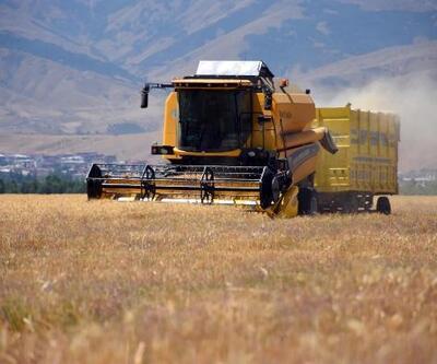 Muş Ovası'nda buğday hasadı başladı