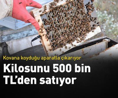 Kilosu 500 bin TL'den satılıyor