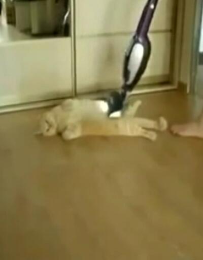 Kedinin ilginç temizlik keyfi