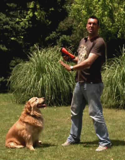 """Köpeğimize """"bekle"""" komutunu nasıl vermeliyiz?"""