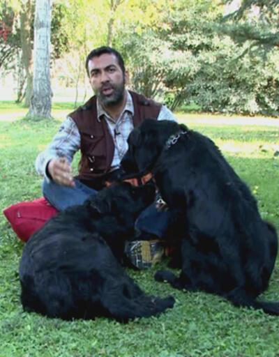 Köpek eğitiminde, köpeğe verilen komutların önemi nedir?