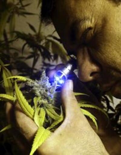 Uruguay'da yasal uyuşturucu satışı başlıyor