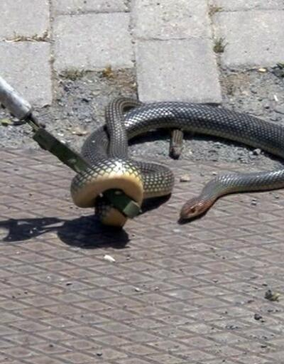 Bu şehirde 243 kişiyi akrep ve yılan soktu