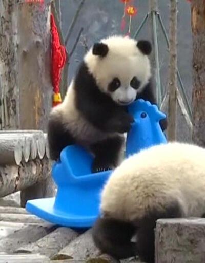 Pandalar Çin Yeni Yılı'nı böyle kutladı