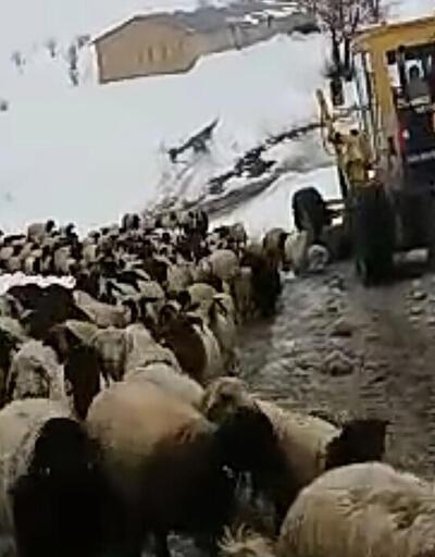 8 çoban ve 2 bin koyun dağda mahsur kaldı