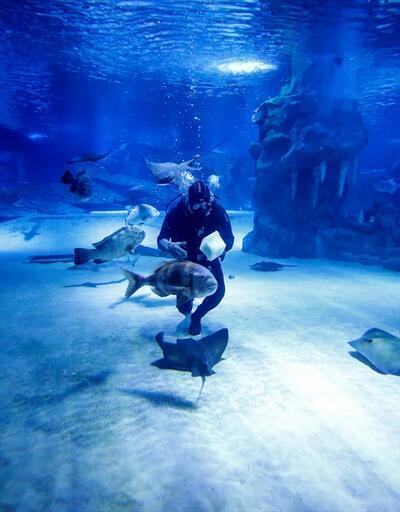 Dalgıçların köpek balığı mesaisi böyle görüntülendi