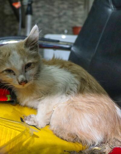 Patileri kesik bulunan kedi tedavi altına alındı