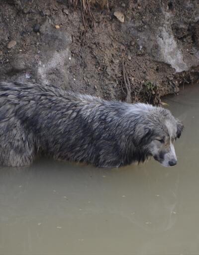 Dereye düşen köpek güçlükle kurtarıldı