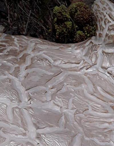 Erzincan'da dev mantar buldular... Kilosu 100 liradan satılıyor
