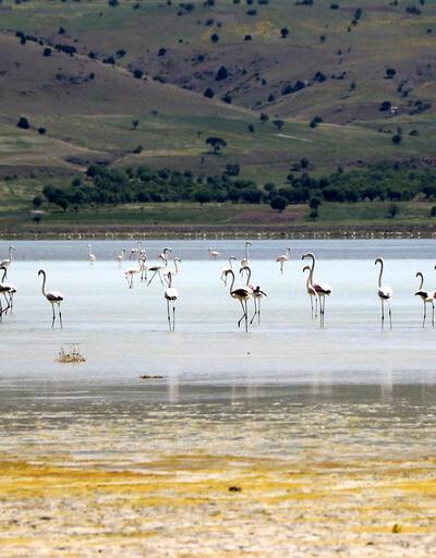 Flamingoların en önemli gölü kurudu