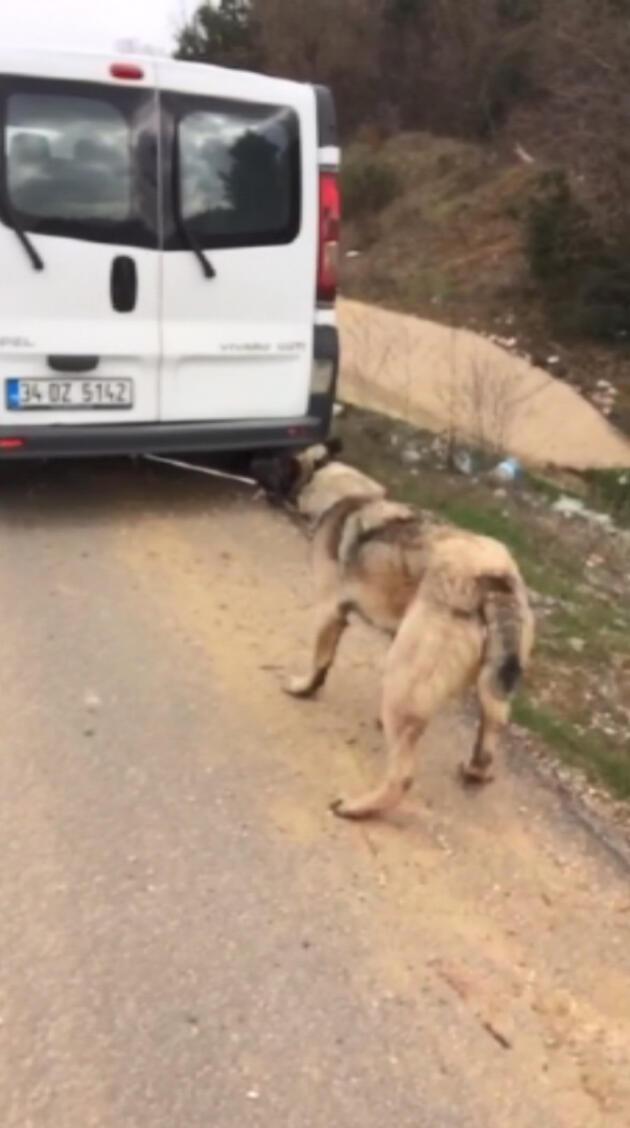 Köpeğini araca bağlayıp sürüklemişti...İşte cezası