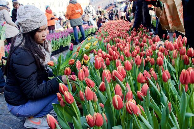 """Hollanda'da """"Ulusal Lale Günü"""" etkinliği"""