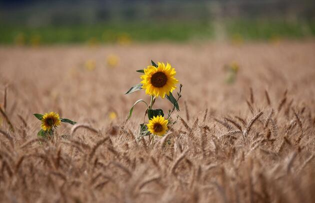 """Sarı gelin""""in uyanışı büyülüyor"""