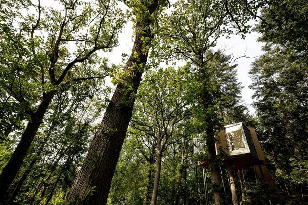 Ağacın üstüne otel yaptılar! En önemli özelliği...