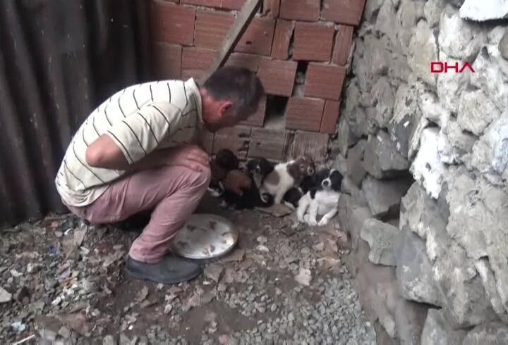 O işçiye sokak hayvanlarına bakma cezası