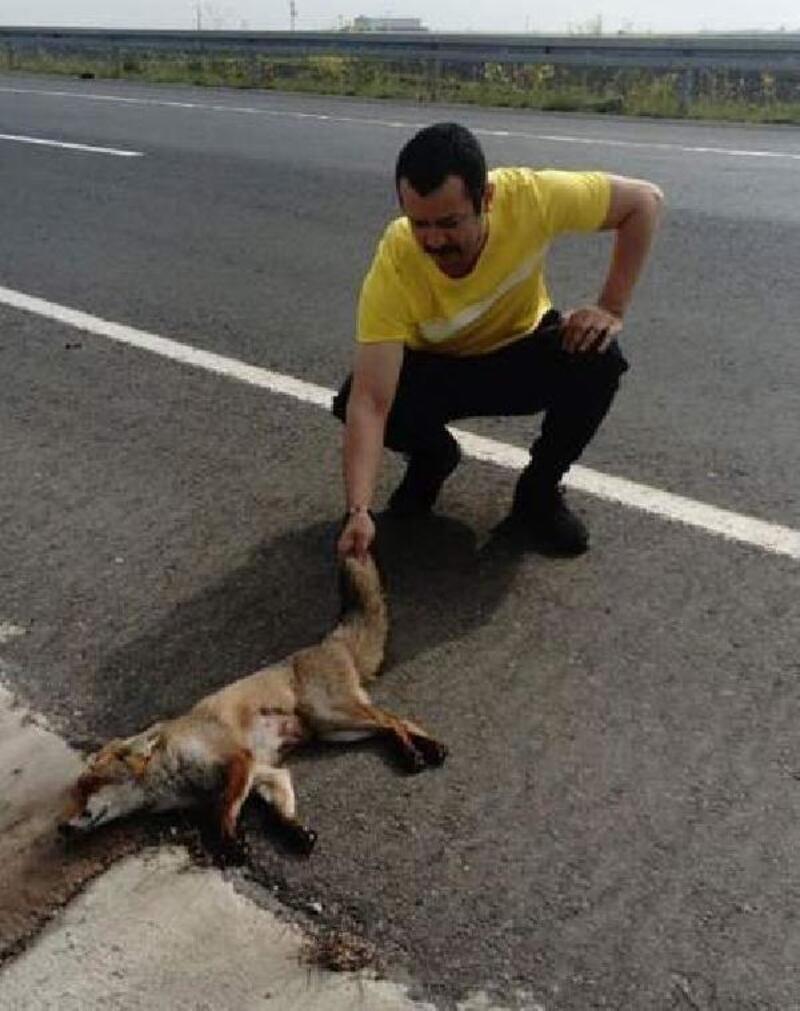 Yaralı tilkinin tedaviye alınmasını sağladı