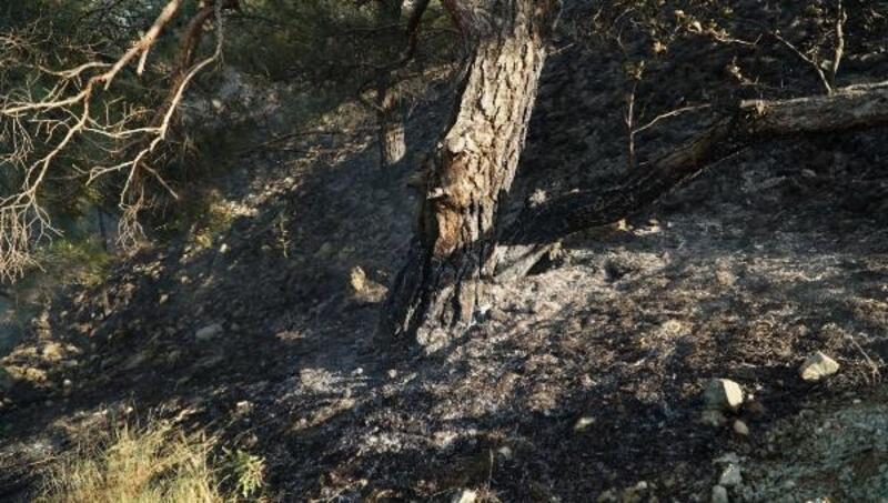 Adıyaman'da ormanlık alandaki yangın söndürüldü