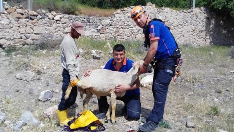 Kuyuya düşen koyunu AFAD kurtardı