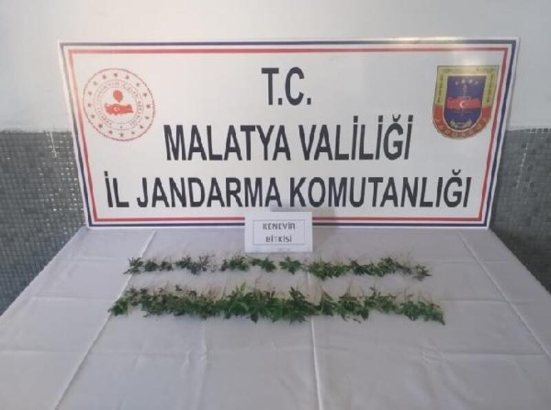 Malatya'da 152 kök kenevire 3 gözaltı