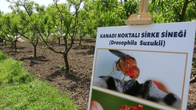 Kimyasal kullanmadan zararlı sinekleri yok etmek için kadın çiftçilere eğitim verildi