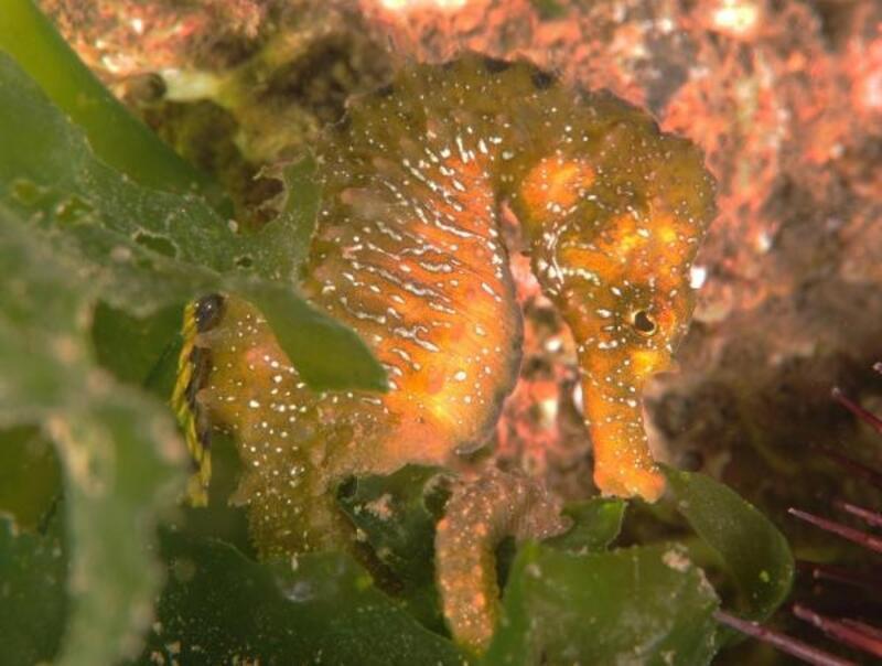 Temizlenen İzmit Körfezi'nde 57 farklı balık ve canlı türü yaşıyor