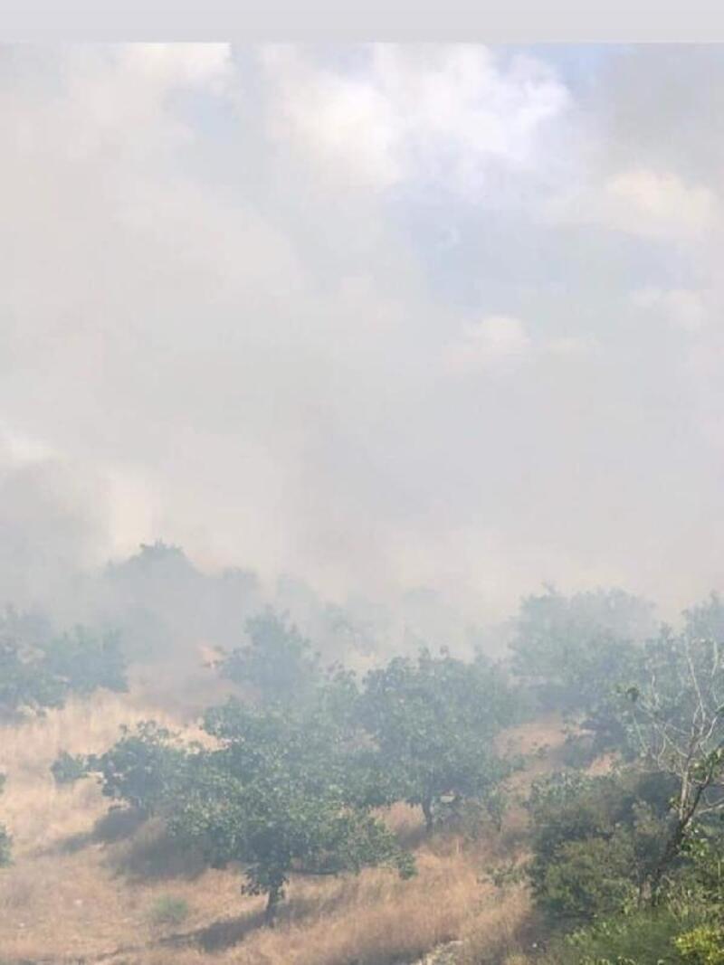 Gaziantep'te fıstık bahçesinde yangın