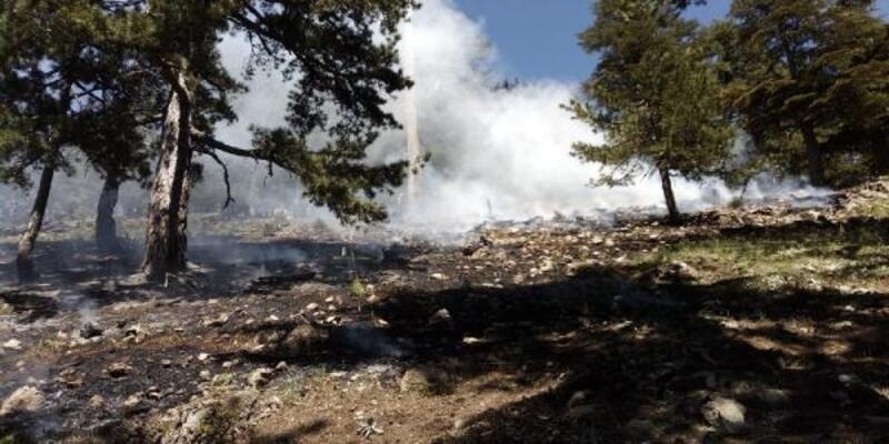 Adana'da 6 dekar orman kül oldu