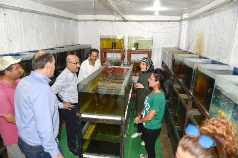 Vali Demirtaş, 'akvaryum balıkçılığı' üretim çalışmalarını inceledi