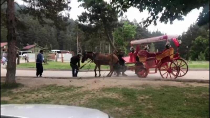 Abant'ta faytondaki at yorgunluktan yere yığıldı