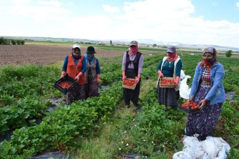 Mevsimlik işçi olarak geldiği köyde, çilek üreticisi oldu