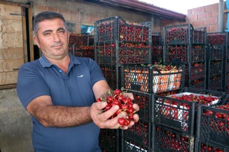 Tokat'ta kiraz ihracatı başladı